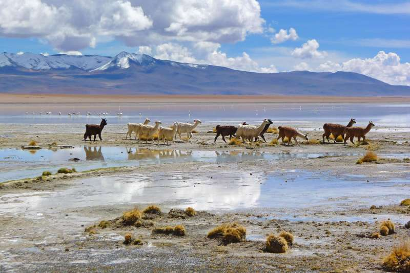 Voyage à pied : Les joyaux de la Bolivie