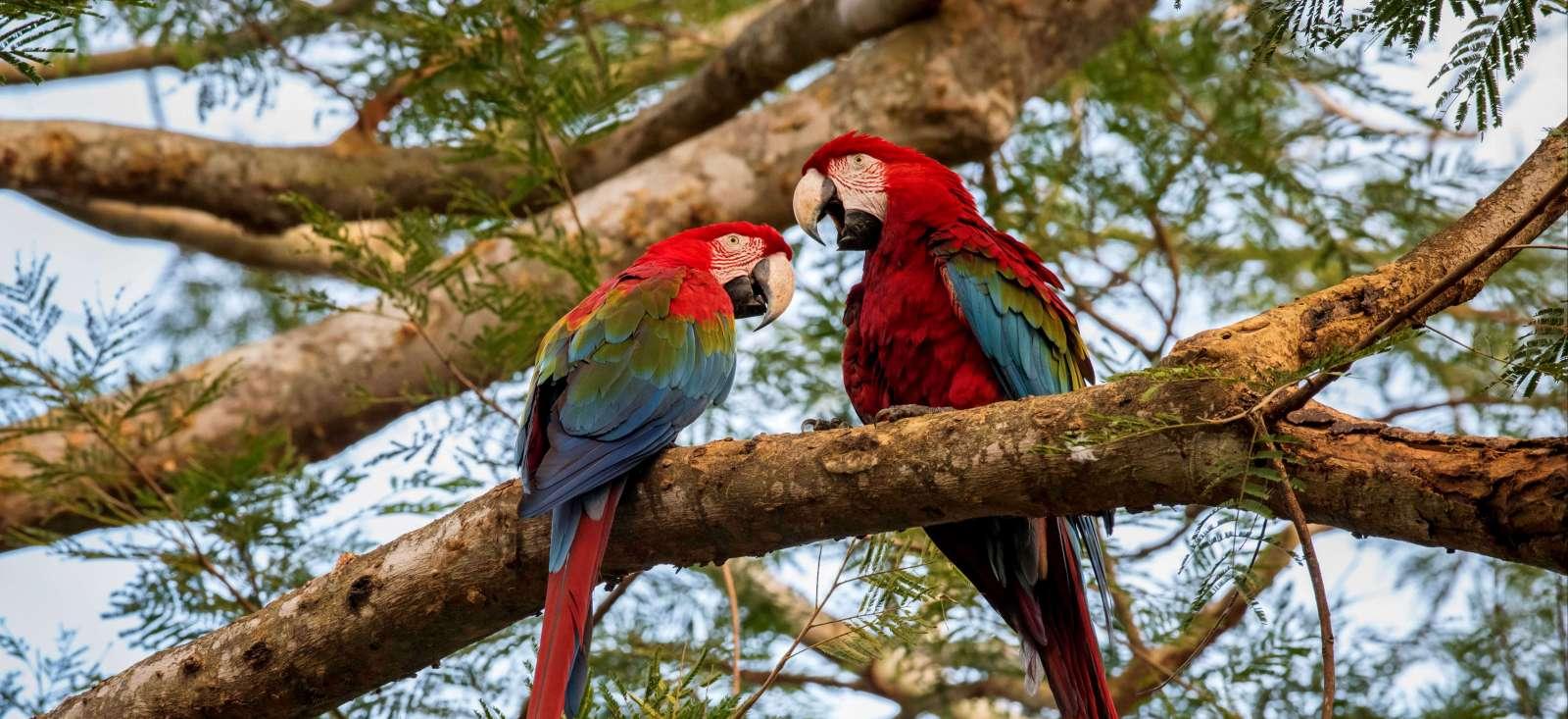 Voyage à pied Brésil : Du Pantanal à Rio