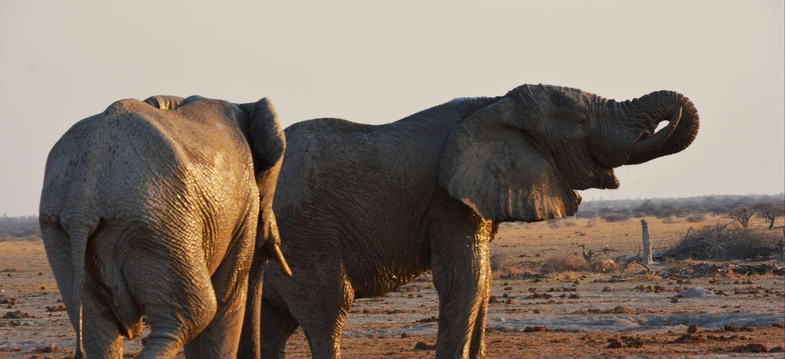 Voyage avec des animaux : Au temps des explorateurs !