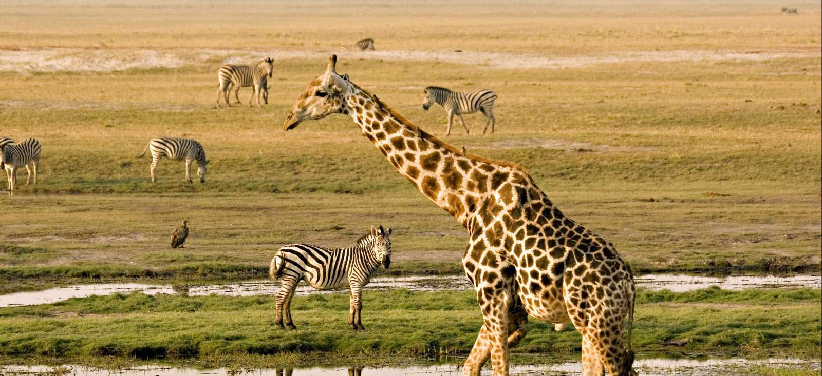 Voyage avec des animaux : Botswana : Un concentré de safari !