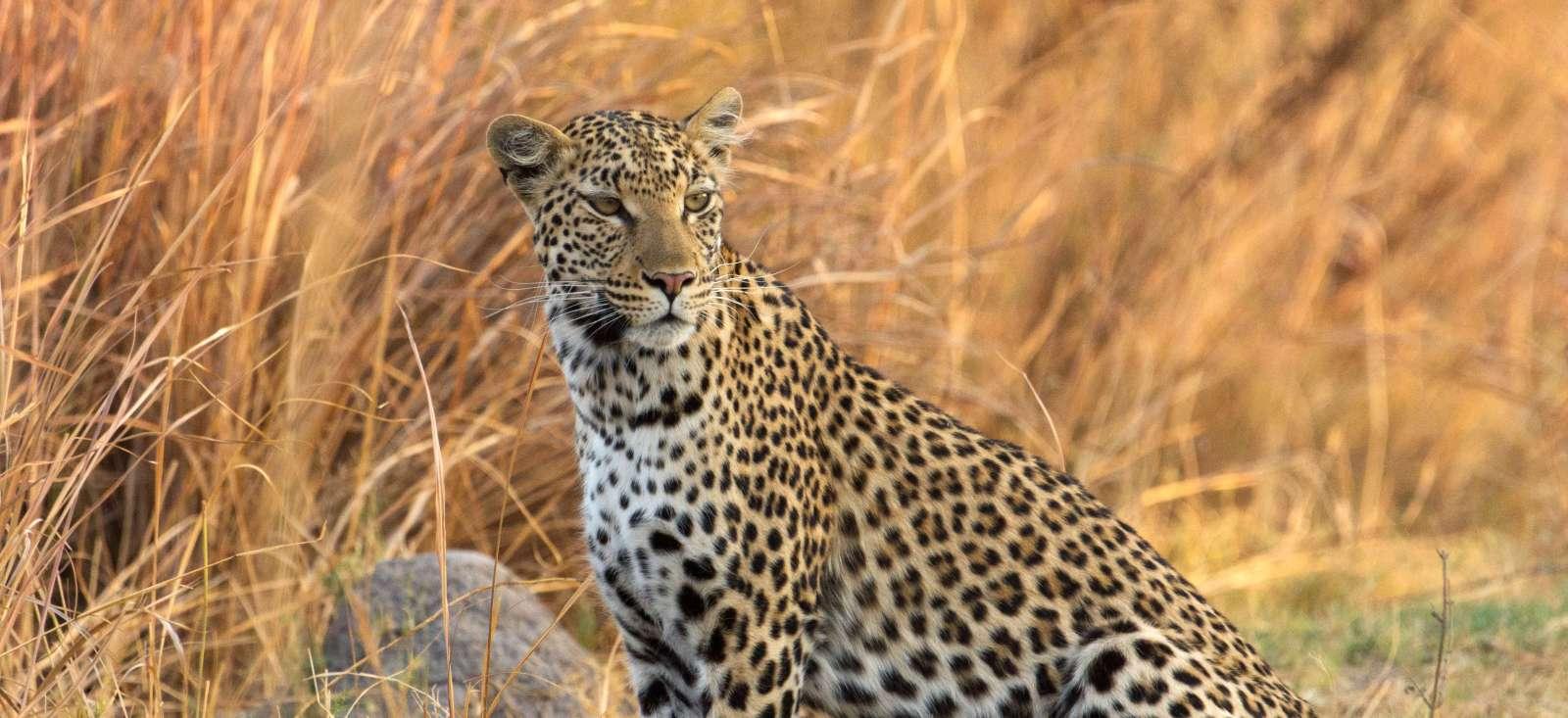 Voyage en véhicule Botswana : Safari sauvage au cœur des parcs !