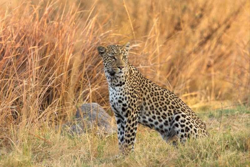 Voyage en véhicule : Botswana : Safari sauvage au cœur des parcs !