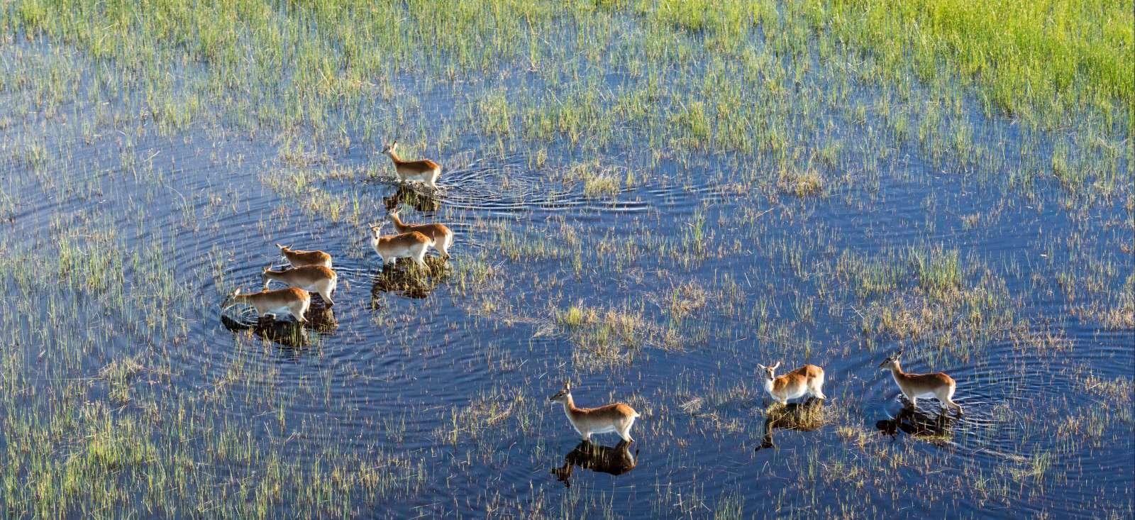 Voyage en véhicule : Botswana : Paradis des animaux !