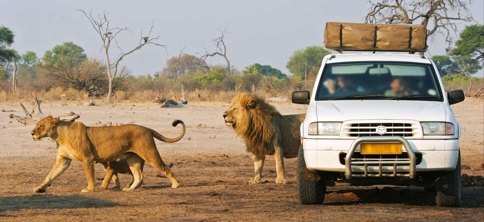 Voyage en véhicule : Le Botswana sous les étoiles