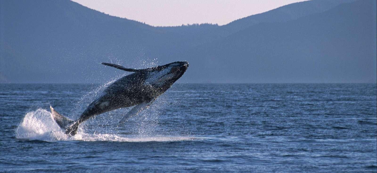 Voyage à pied Canada : Vancouver Island