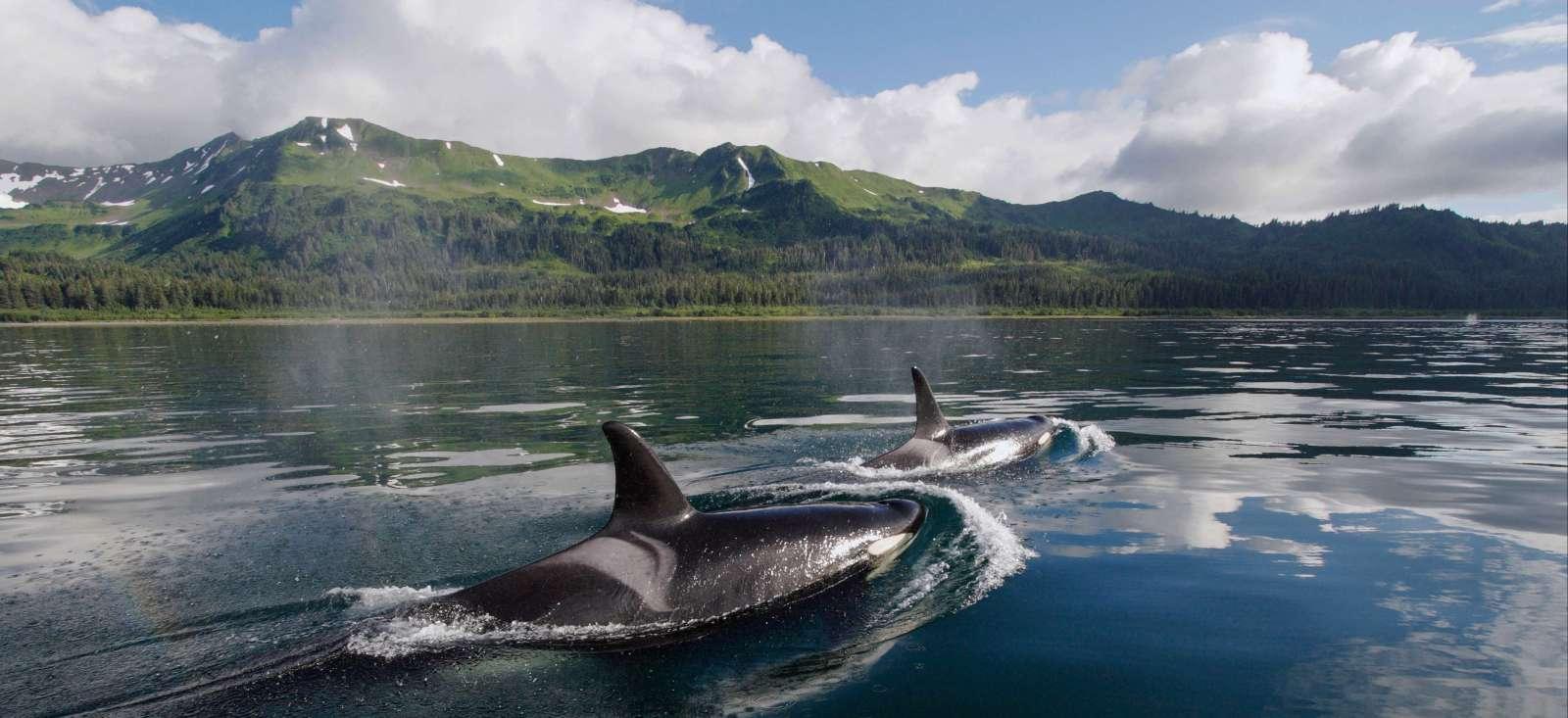 Voyage sur l'eau Canada : Inside Passage