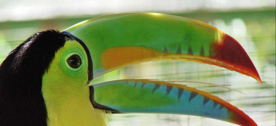 Odyssee Tropicale Du Costa Rica Au Nicaragua Un Voyage En Famille A Travers Jungle