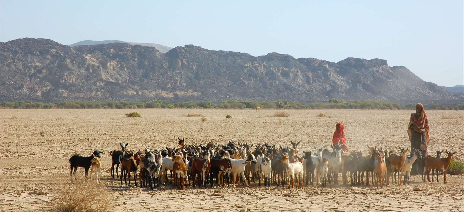 Voyage en véhicule Ethiopie : Ethiopie-Djibouti, un train pour l'aventure
