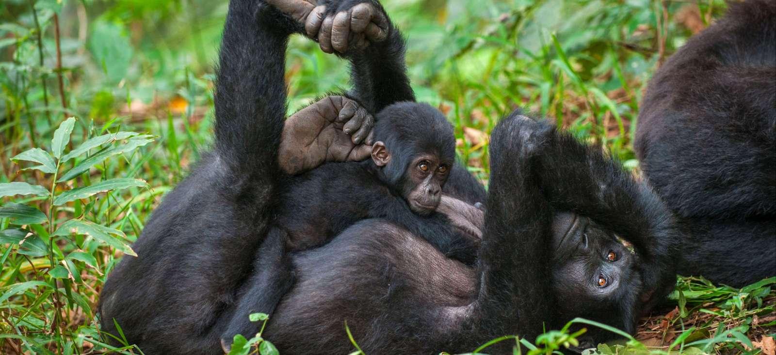 Voyage à pied : Ethiopie & Ouganda, gare aux gorilles !