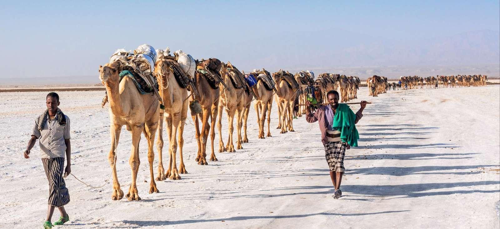Voyage à pied : Sentiers, Volcans et D\'serts d\'Abyssinie