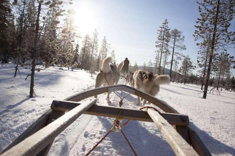 Voyage à la neige : Aventure lapone en traineau