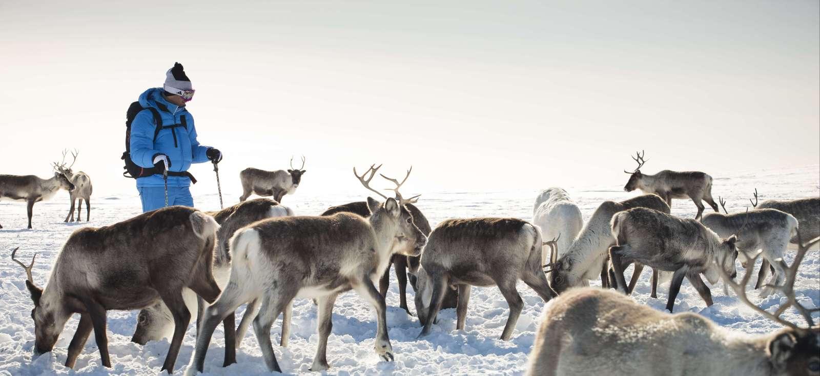 Voyage à pied : La Laponie, 100% nature