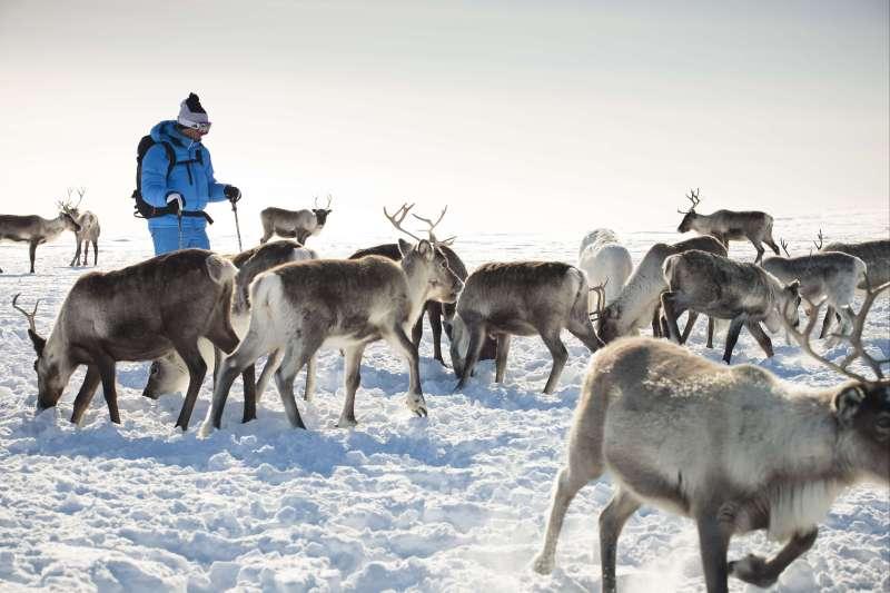 Voyage à la neige : Finlande : La Laponie, 100% nature