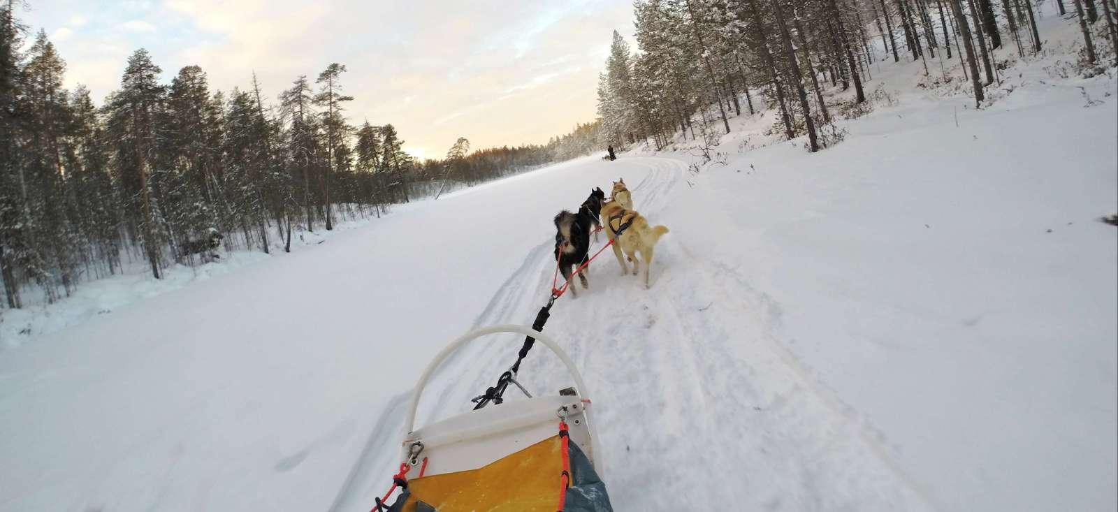 Voyage à pied : Sur la piste des loups