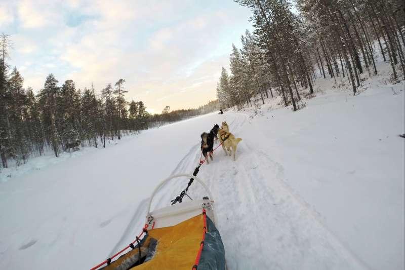 Voyage à la neige : Finlande : Sur la piste des loups