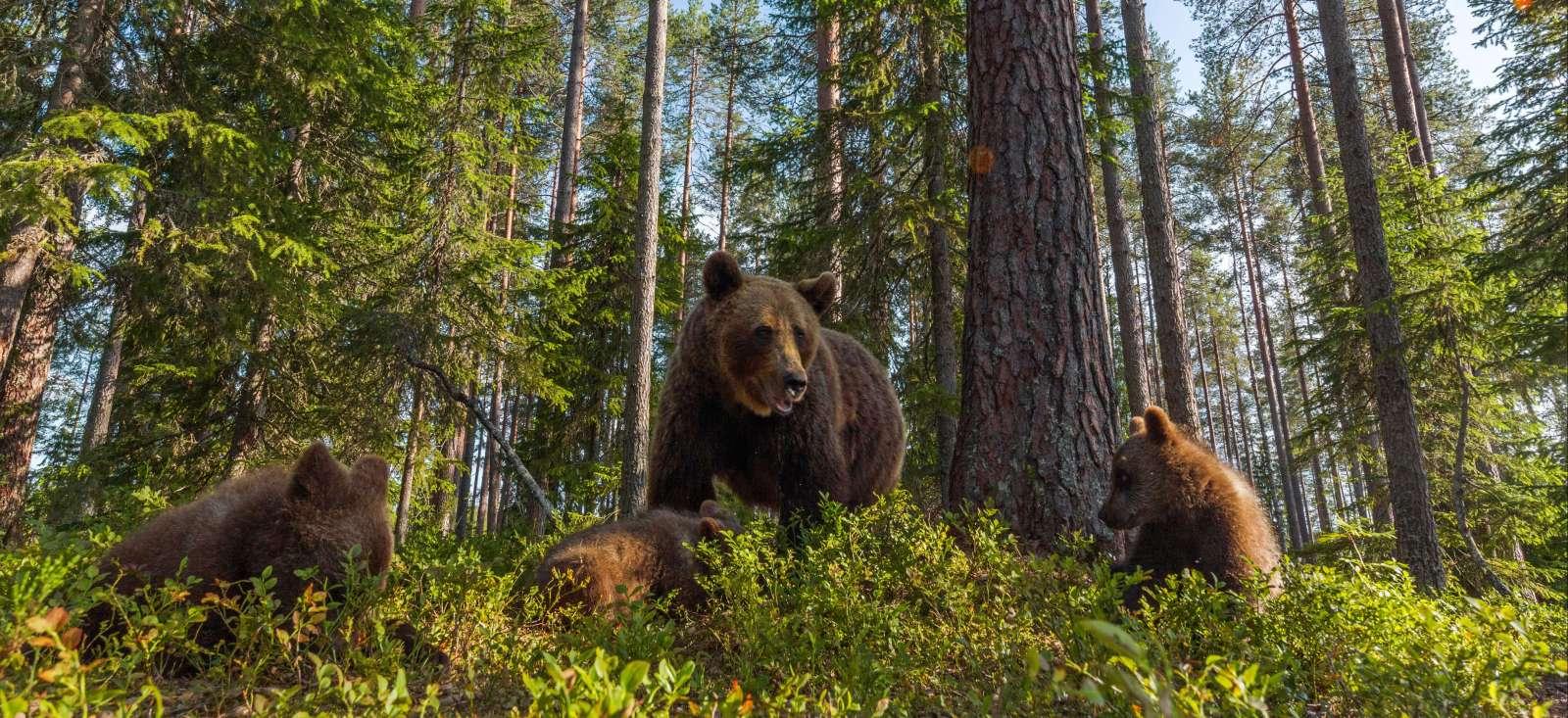 Voyage à pied : Finlande : La Laponie pour tous