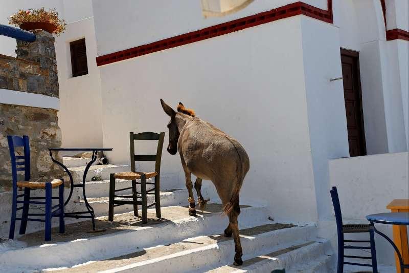 Voyage à pied : Les Cyclades : Les îles du grand bleu