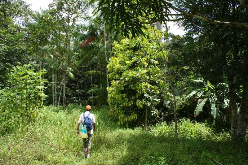 Voyage à pied : Les Incontournables de la Guyane
