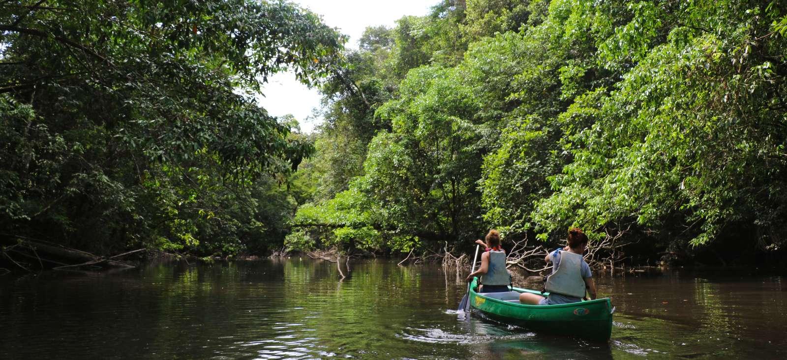 Voyage à pied Guyane : Le livre de la jungle...