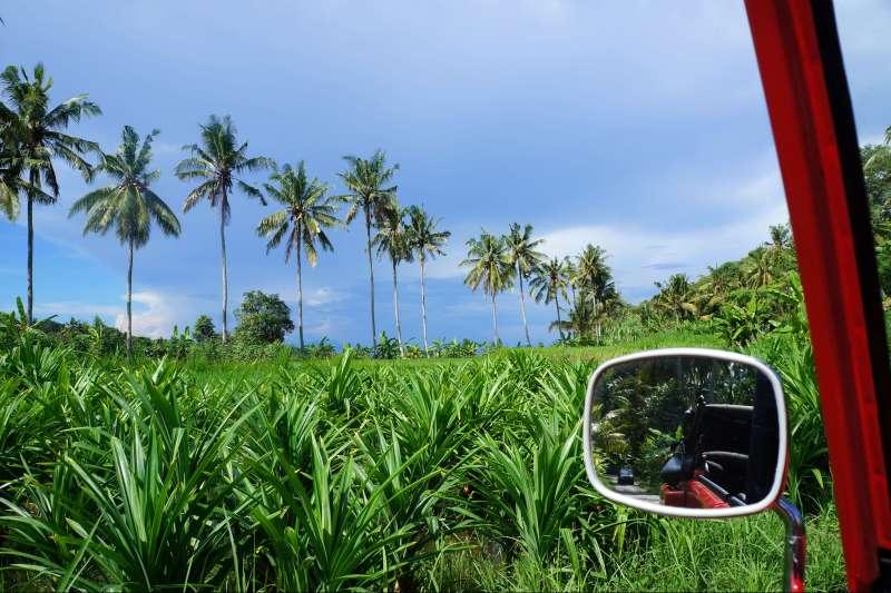 Voyage à pied : Bali, Beach, Bebek & Java