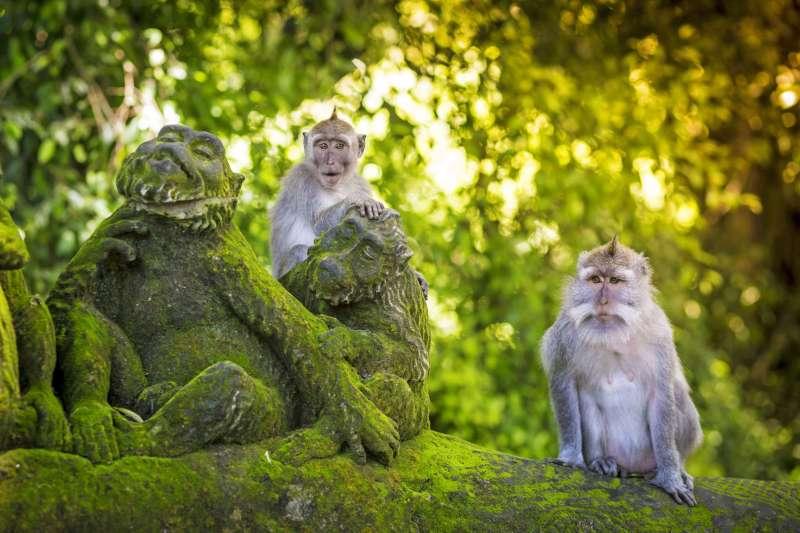 Voyage à pied : Bali : Des volcans sacrés aux temples perdus