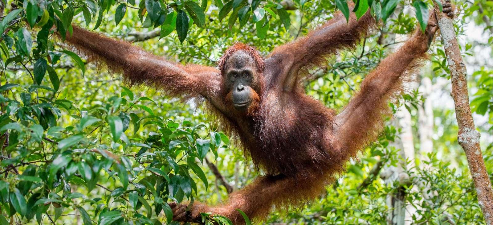 Voyage à pied : Sumatra ou la vie sauvage!
