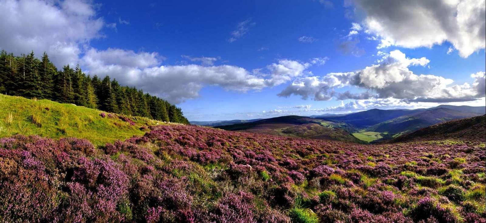 Voyage à pied : Dublin et le Parc National du Wicklow