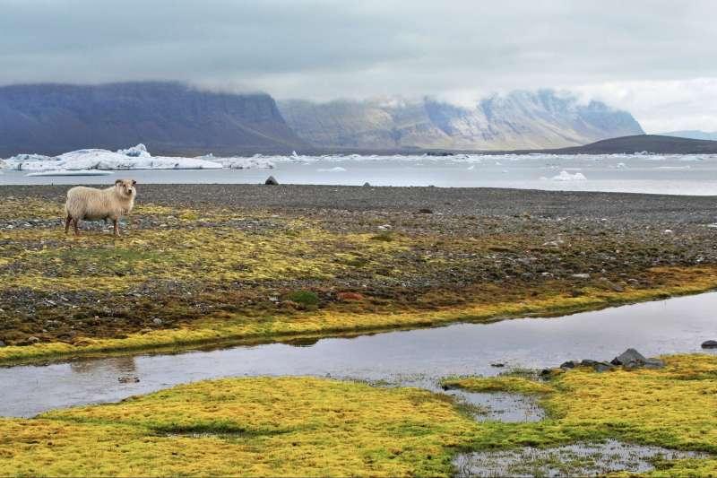 Voyage à pied : Un concentré d\'Islande