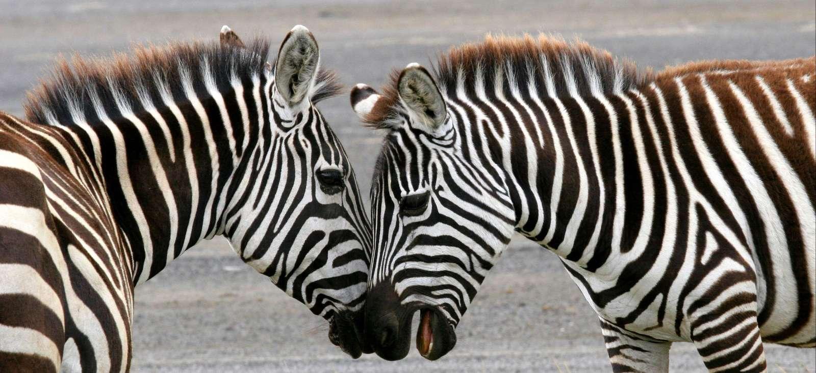 Voyage à pied : Total Trip au Kenya