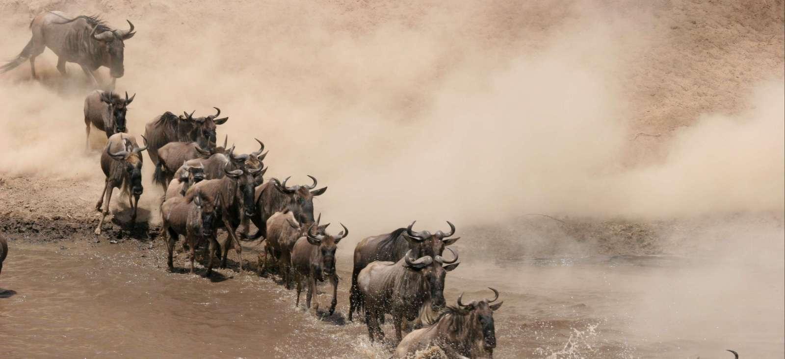 Voyage à pied : Kenya, la ferme africaine