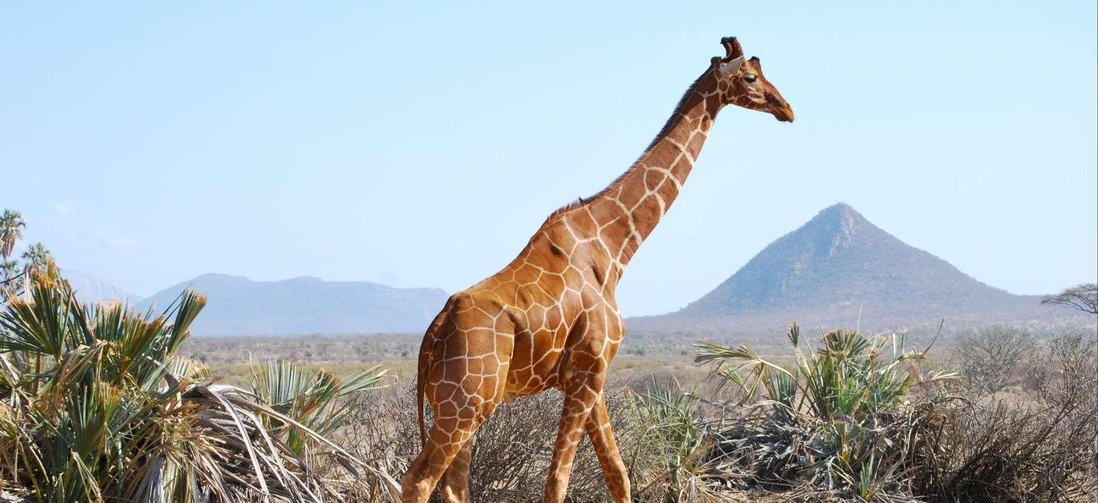 Voyage à pied : Safari des grands parcs Kenyan