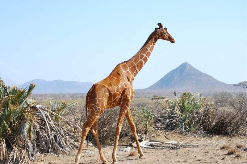 Voyage avec des animaux : Safari des grands parcs Kenyan