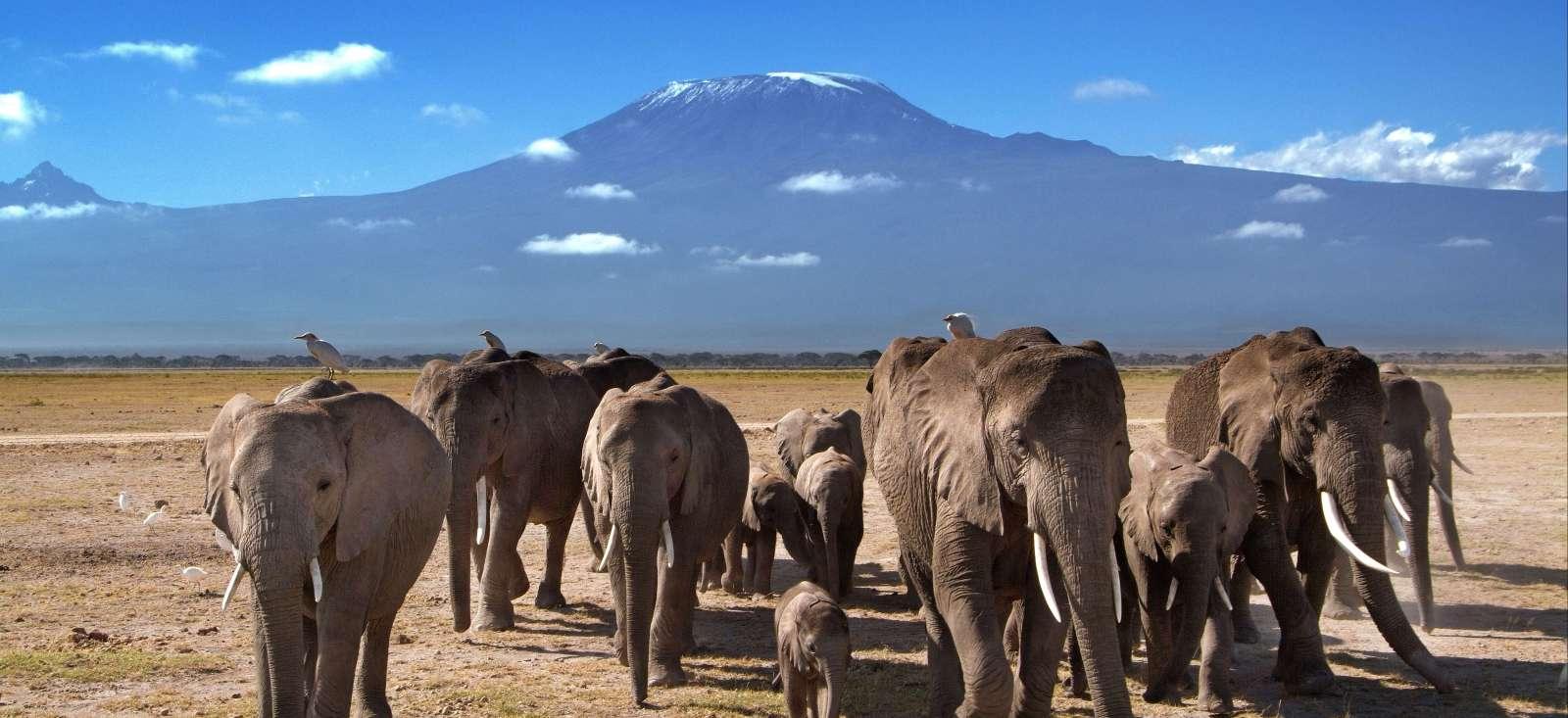 Voyage à pied : Du Masai Mara à l\'océan Indien