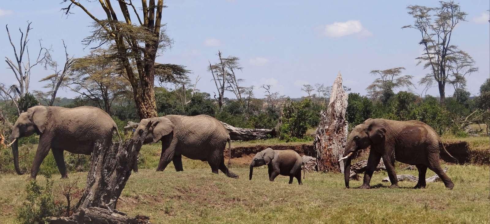 Voyage avec des animaux Kenya : Les incontournables du safari au Kenya