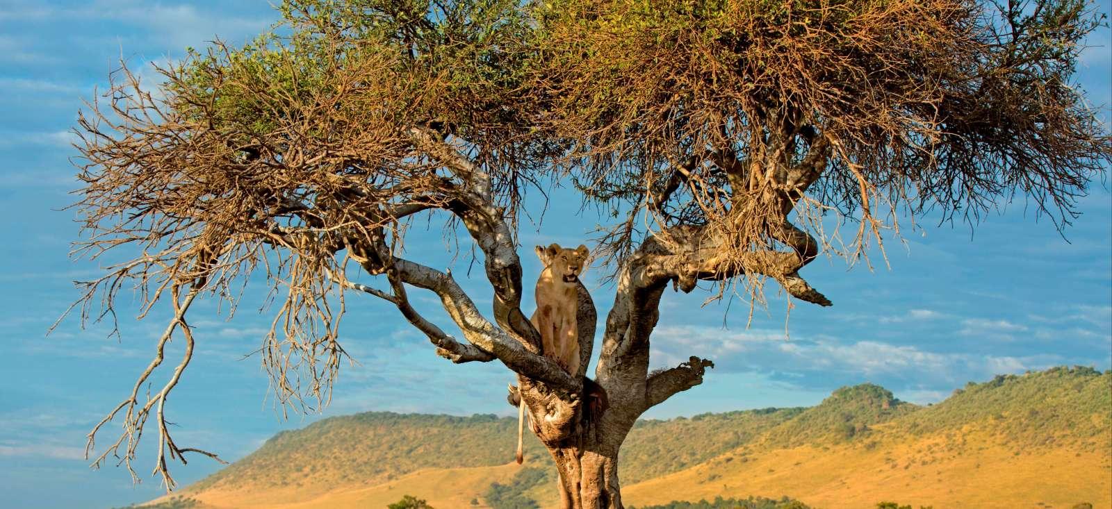 Voyage avec des animaux : Safari & Rando en pays Masaï