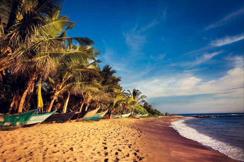 Voyage avec des animaux : De Colombo à Jaffna, best of du Sri Lanka.
