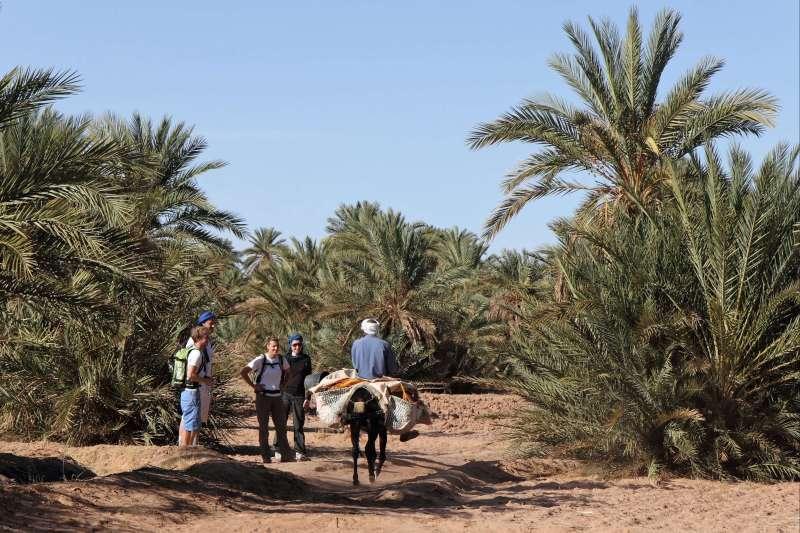 Voyage avec des animaux : Mon chameau à l\'assaut des dunes