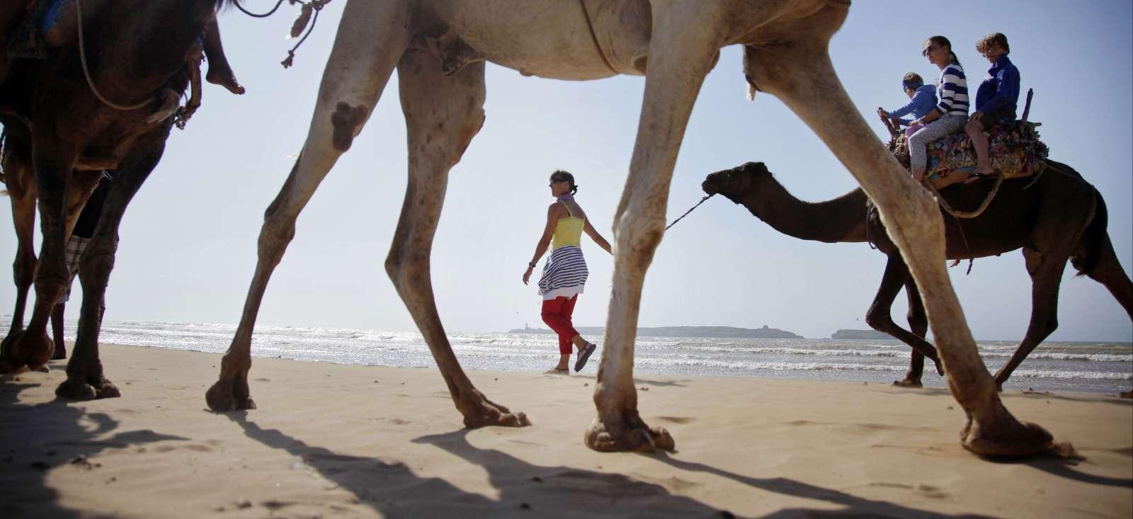 Voyage avec des animaux : Maroc : Des chameaux sur l'océan