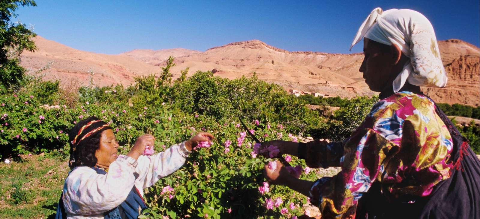 Voyage à pied : Maroc : Une rose dans ma vallée (Vallée du Dadès)