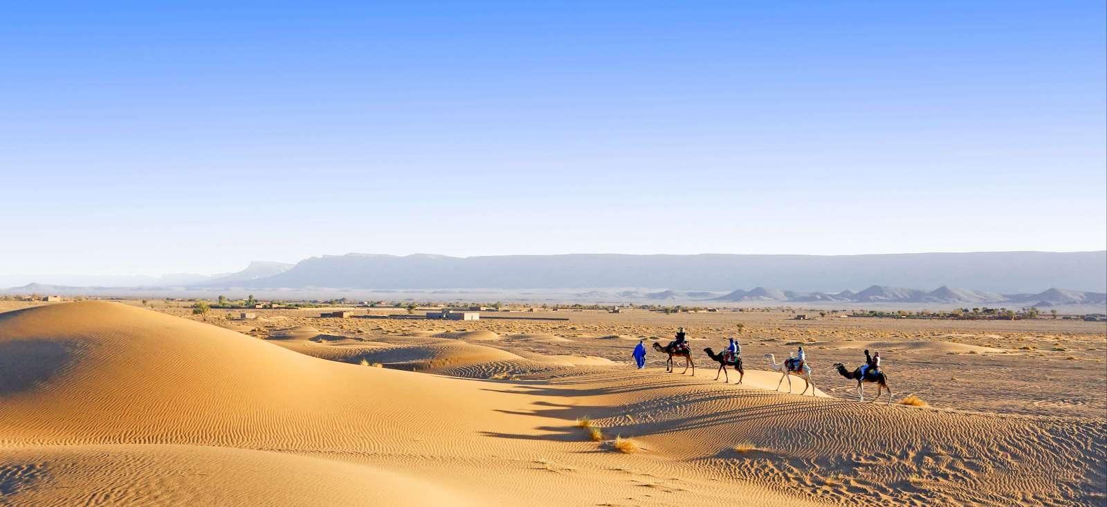 Voyage avec des animaux : Mon chameau à l'assaut des dunes