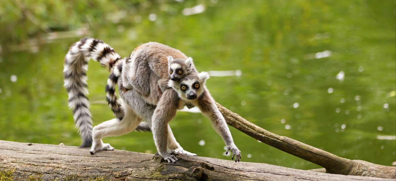 Voyage à pied Madagascar : Cap à l\'Est en famille !