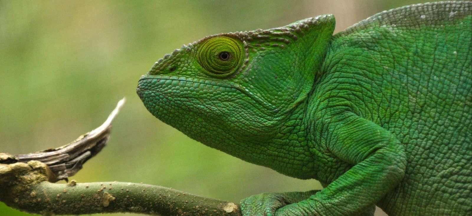 Voyage à pied : Les sites incontournables de Madagascar