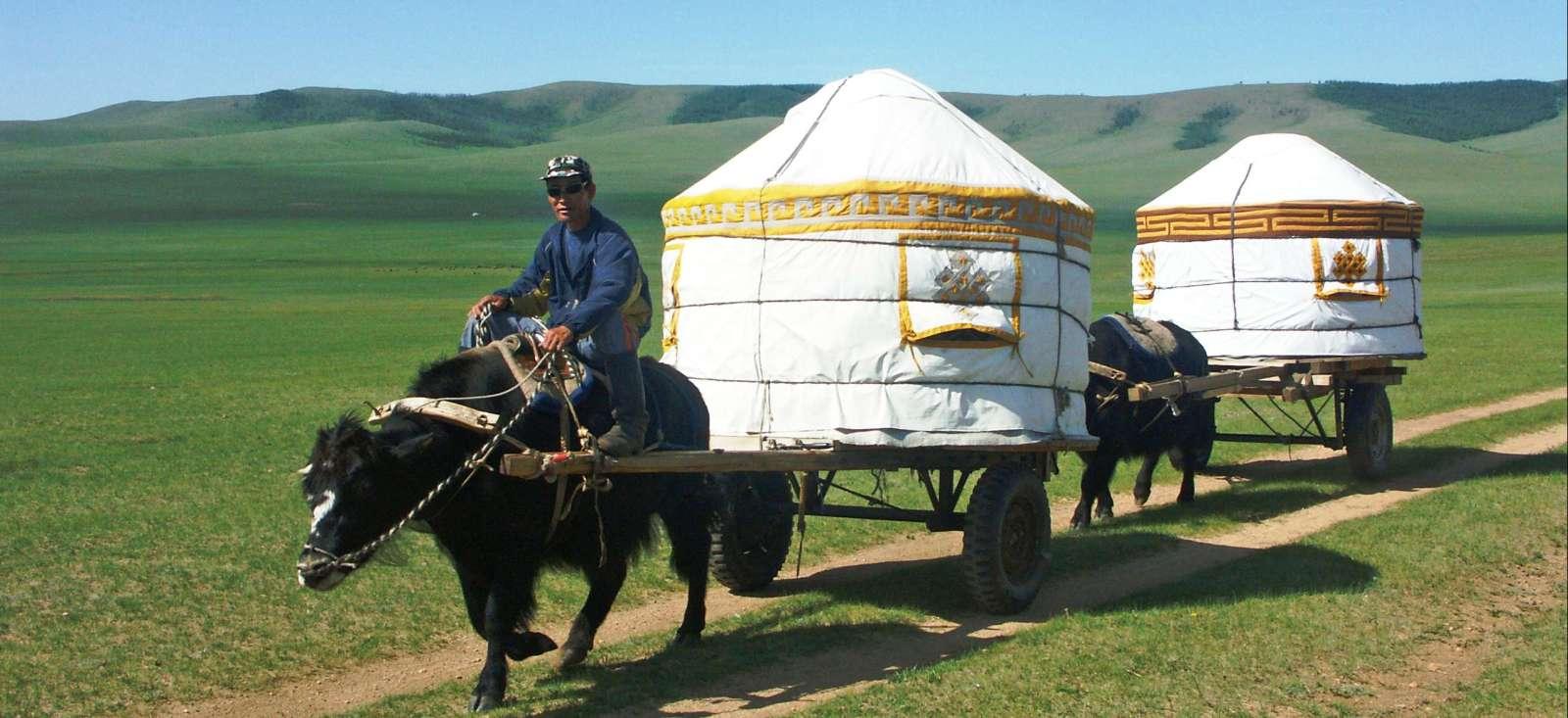 Voyage à pied : Yak à tirer la yourte chez Gengis Khan