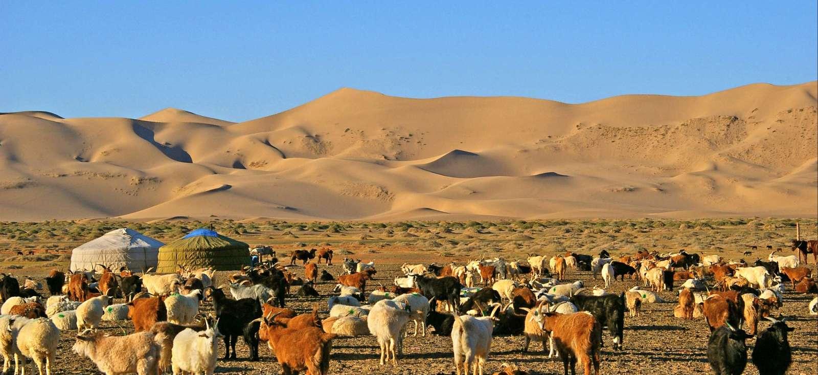Voyage à pied : Du désert de Gobi au Khangaï