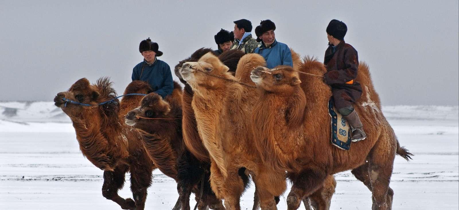 Voyage avec des animaux : Glaces, rapaces et 1000 chameaux.