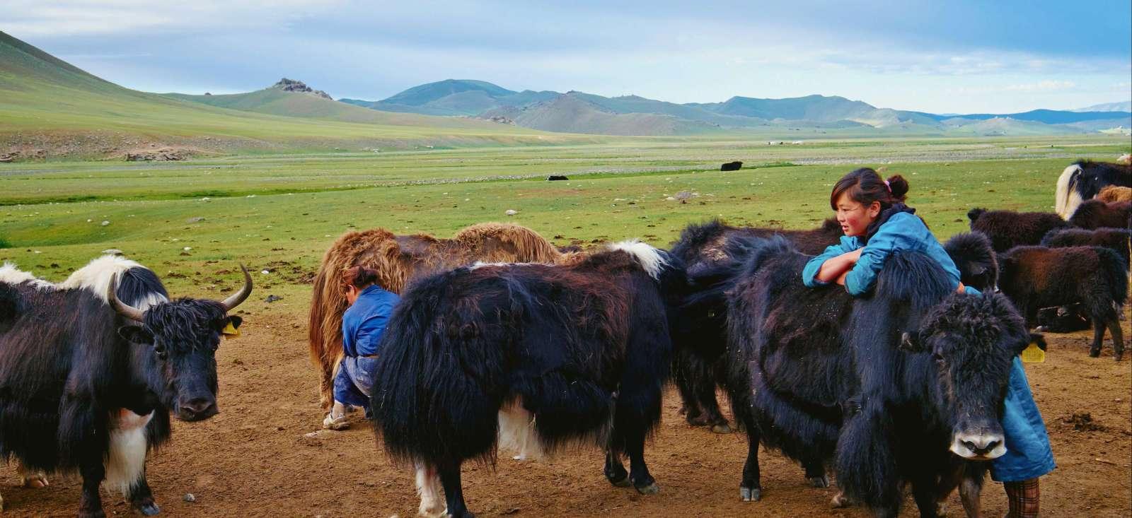 Voyage à pied : Focus sur les éleveurs de yaks !