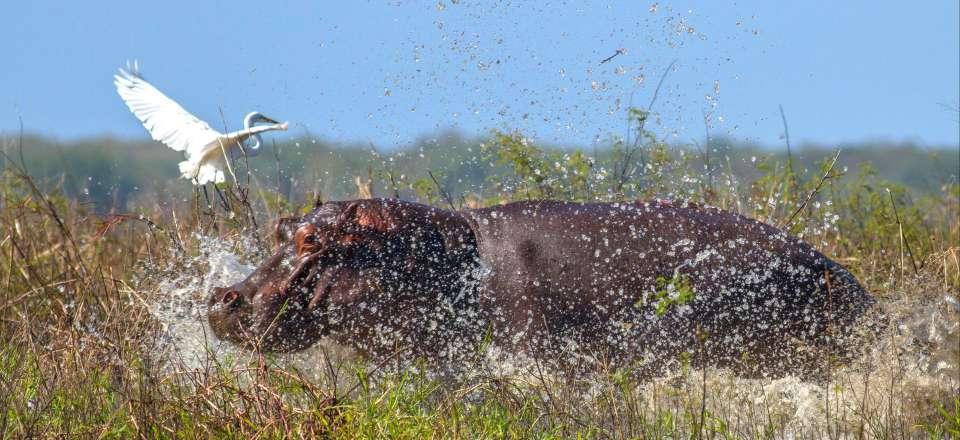 animal traversant la nouvelle feuille datant villageois Cara Nak datant