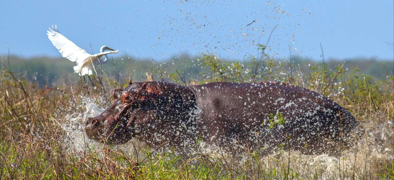 Voyage à pied : Du parc de Gorongosa aux plages du Mozambique