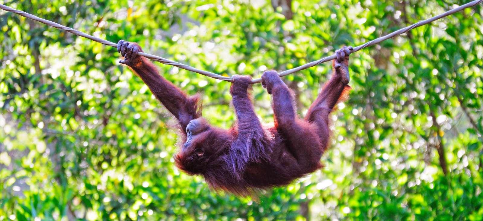 Voyage à pied Malaisie : Escapade nature à Bornéo