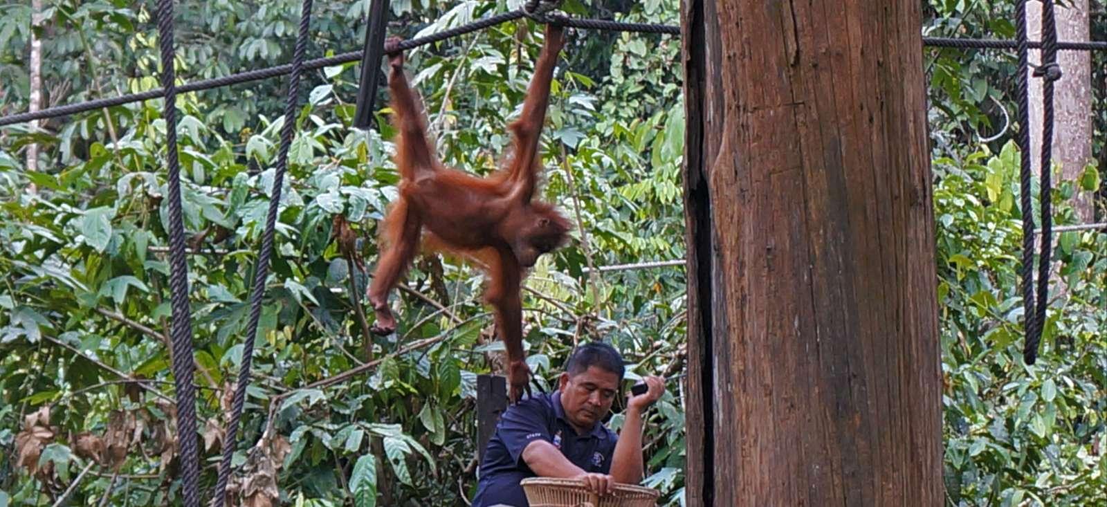 Voyage à pied : Au coeur de la Jungle du Sarawak
